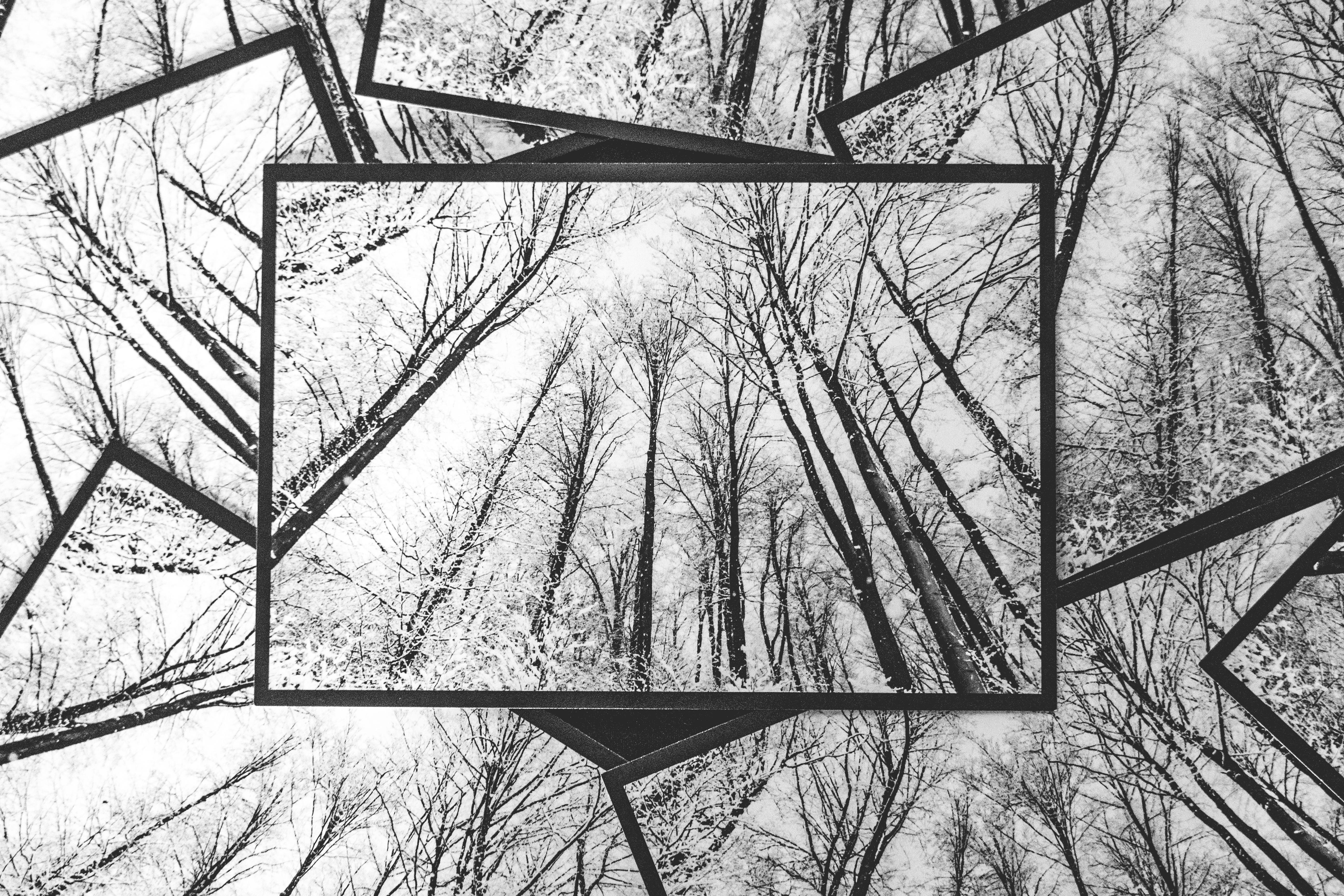 Ansichtskarte Winterwald-Motiv
