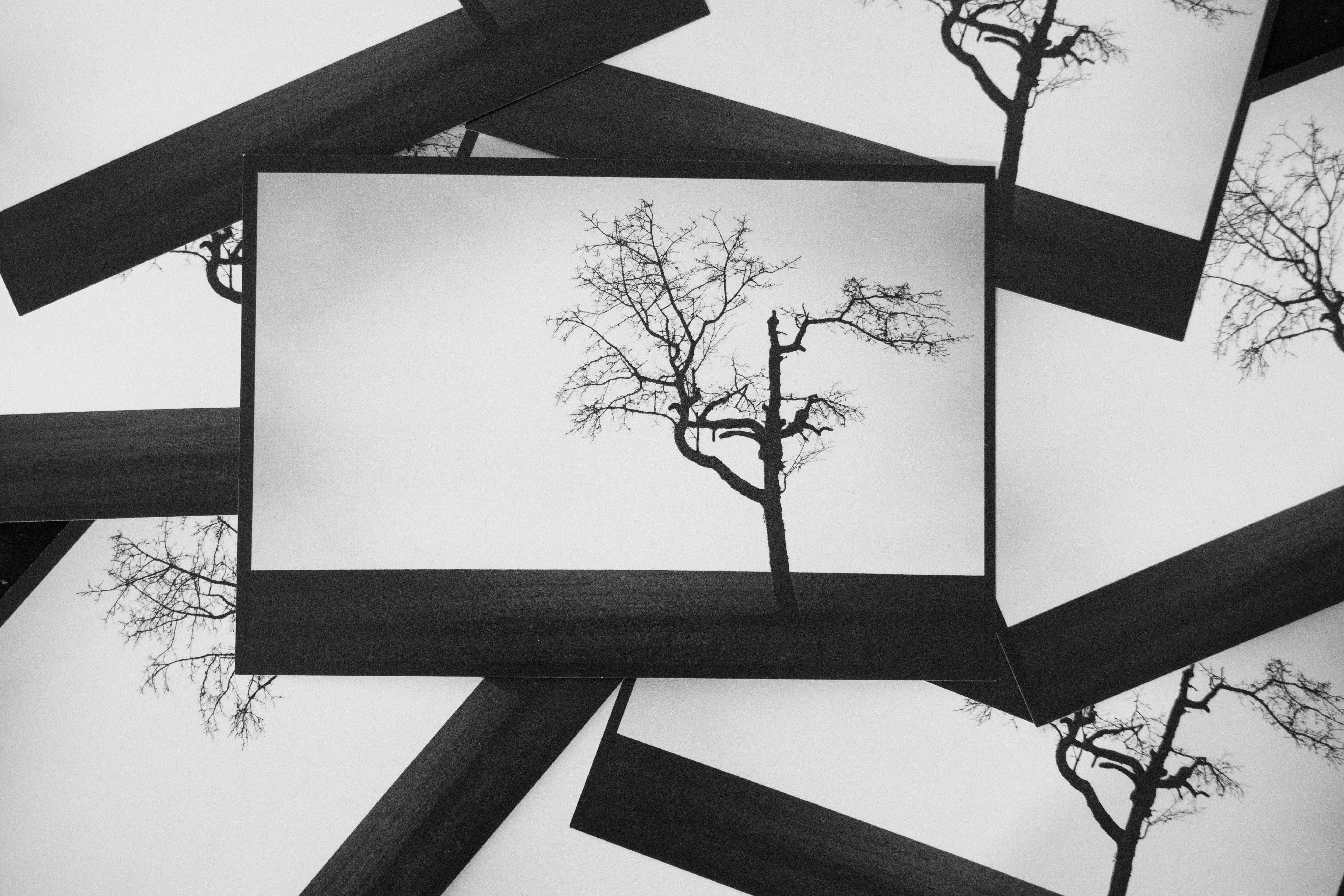 Ansichtskarte Kirschbaum-Motiv